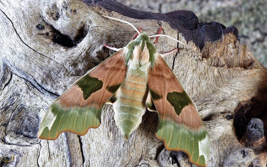 The Moth Spectacular